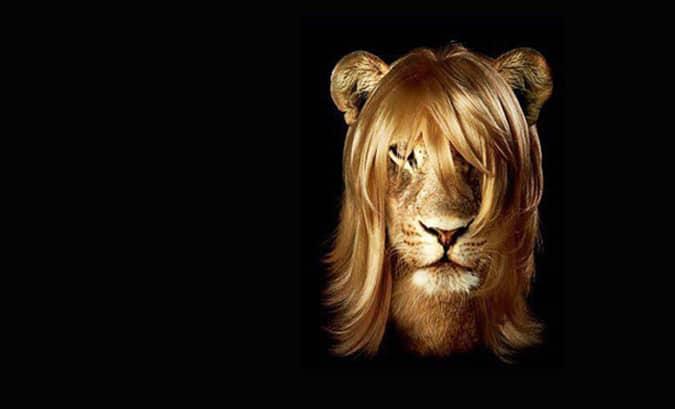 Lion_Cheveux_sans_Shampooing